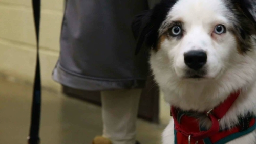 Dogs Behind Bars: Filming the 'Happy Hounds' Prison Dog Program
