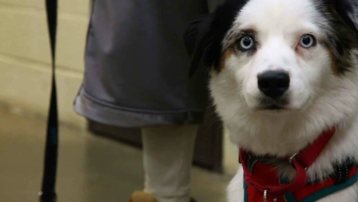 Blog | Dogs Behind Bars: Filming the 'Happy Hounds' Prison Dog Program